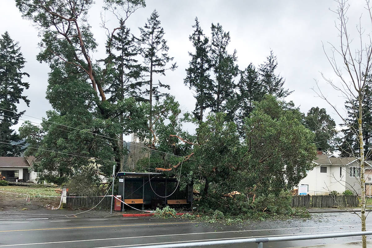 Downed tree knocks out power for 3,200 BC Hydro customers in