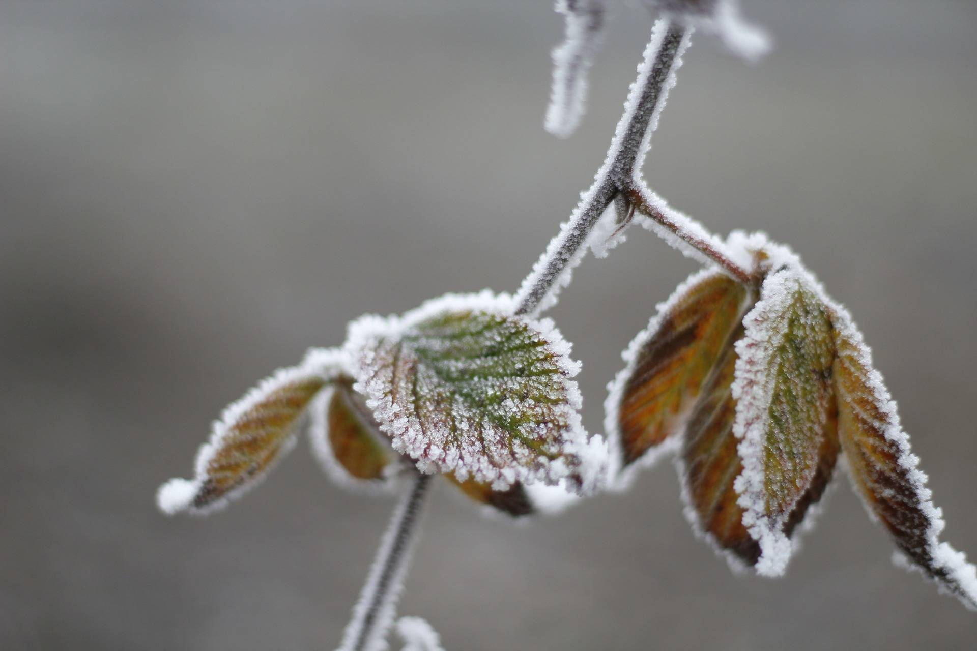 SCIENCE MATTERS: Winter weather doesn't disprove global